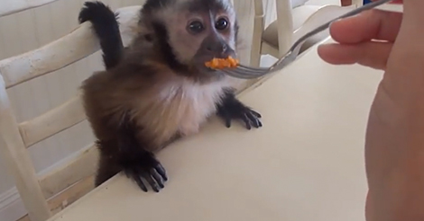 monkey-eating