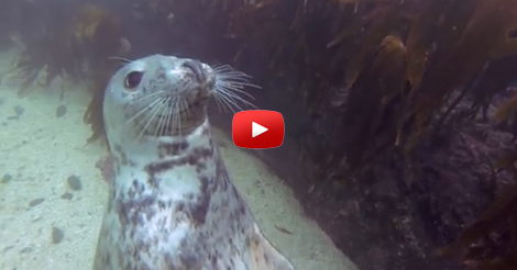 GoPro--Seal-Belly-Rub