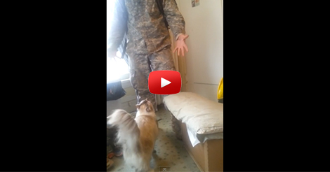 Cat-Welcomes-Home-Soldier