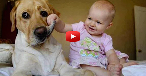 Funny-babies-annoying-dogs