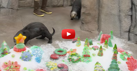 All-Our-Otters-Want-for-Christmas