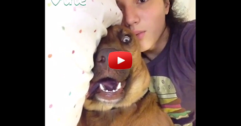 Crazy-Face-Dog