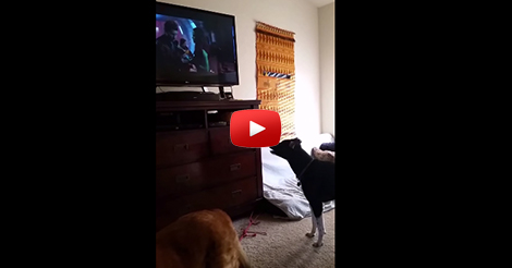 Dog-trying-to-watch