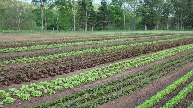 How local, organic farms help the environment and you, according to a farmer
