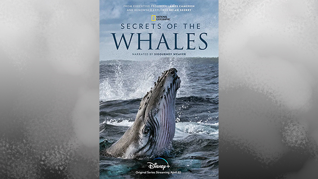 Just in time for Earth Day, Disney+ presents the NatGeo series 'Secrets of the Whales'