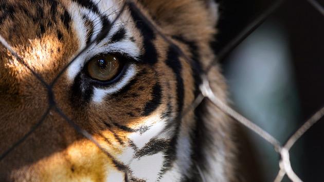 Carole Baskin offering $5k reward for missing tiger in Houston