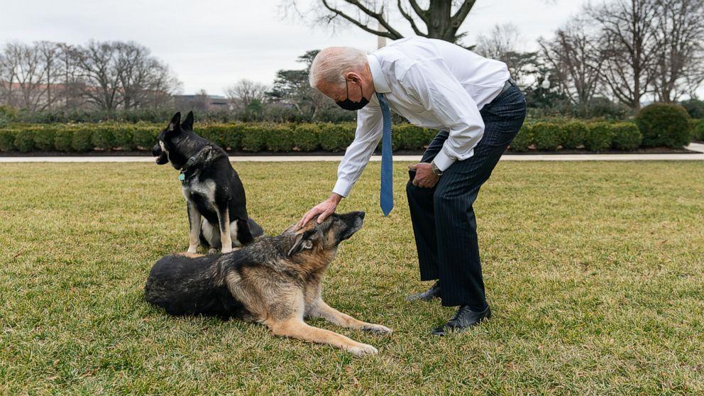 Bidens announce their elder German shepherd, Champ, has died