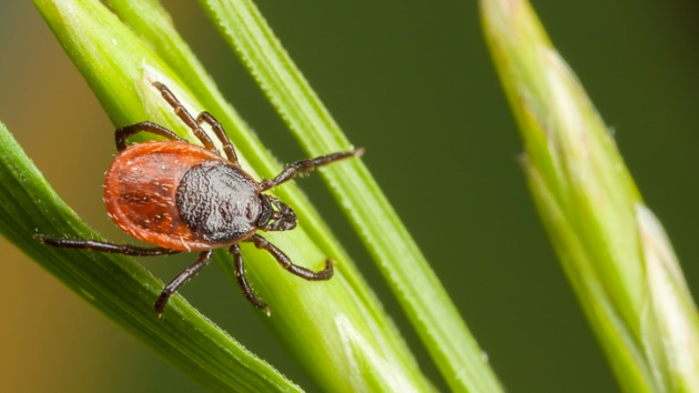 Why this tick season may be bad — and how to protect yourself