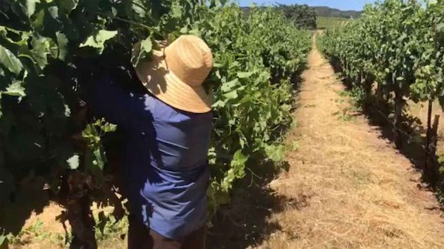 Farmworkers especially vulnerable as dangerous heat wave scorches wide swath of US