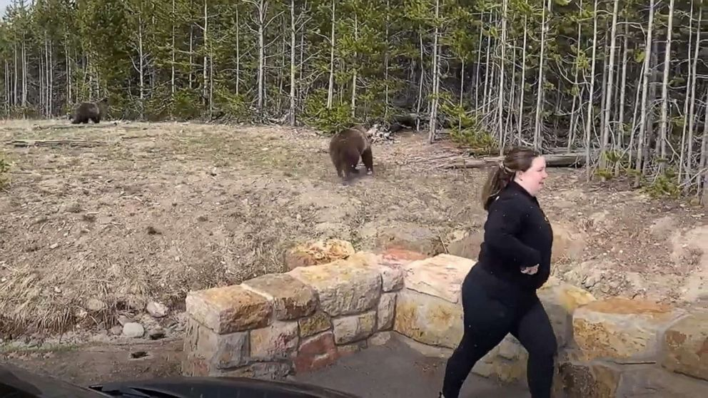 Cellphone snapshot of grizzly has Yellowstone tourist facing federal charges