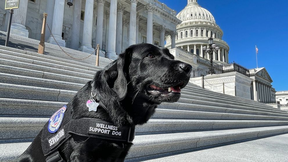 Capitol Police using support dogs in wake of Jan. 6 trauma
