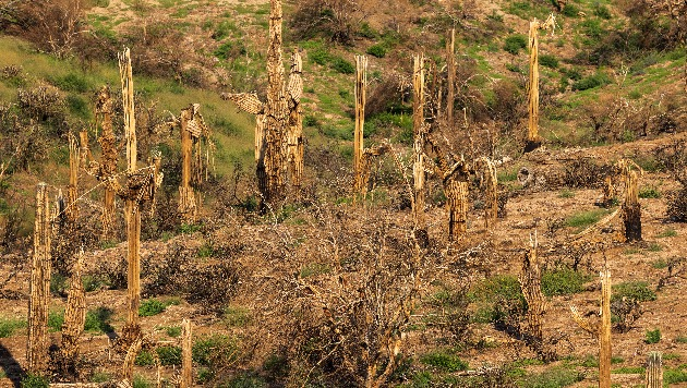 Fungal disease on the rise in West possibly tied to changing climate patterns: Experts