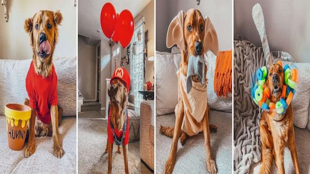This dog is winning Halloween with his 31 amazing costumes
