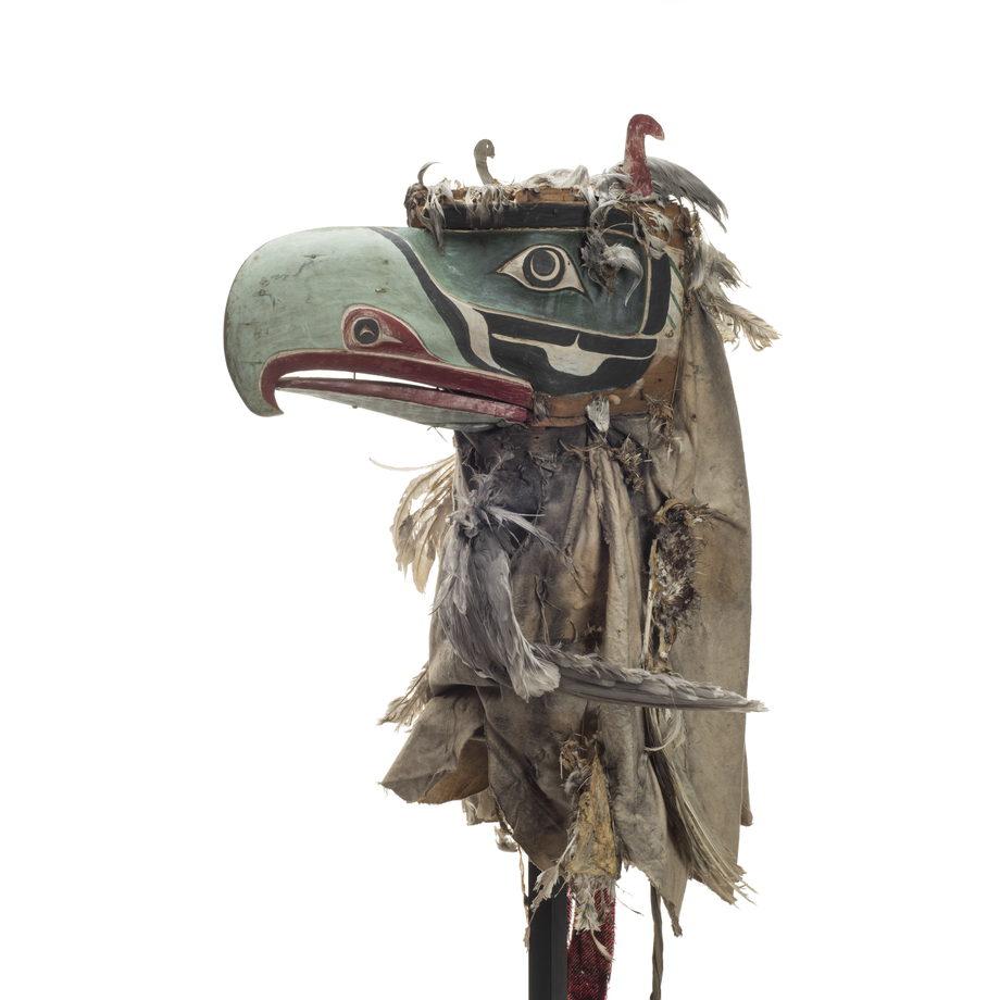 D'oiseau duveteux Kulus, au bec crochu vert clair, les orbites vert foncé, un voile de coton couvert de plumes.