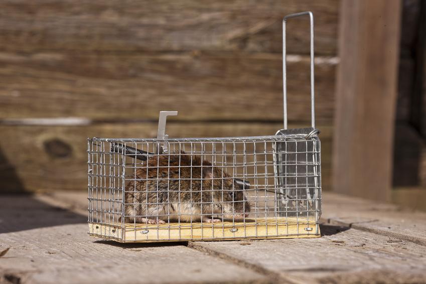 Dead squirrel removal