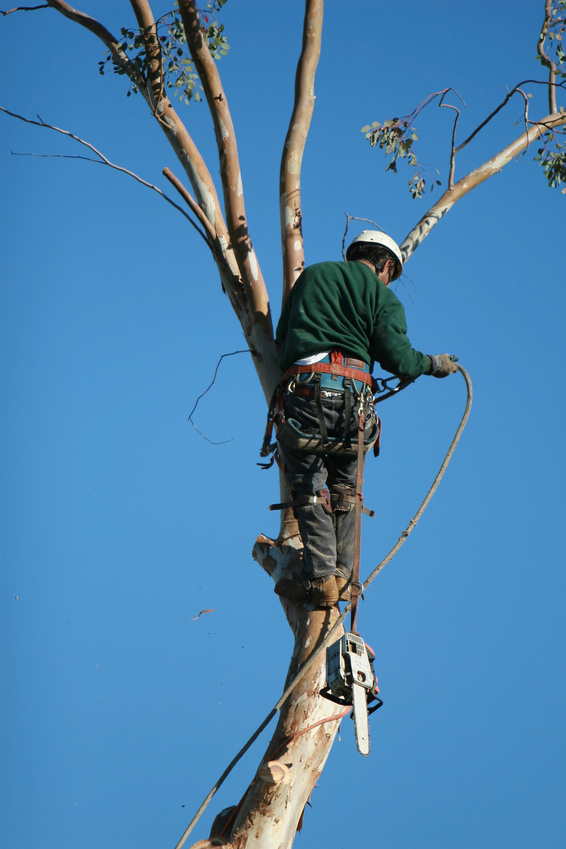 Tree removal somerset nj