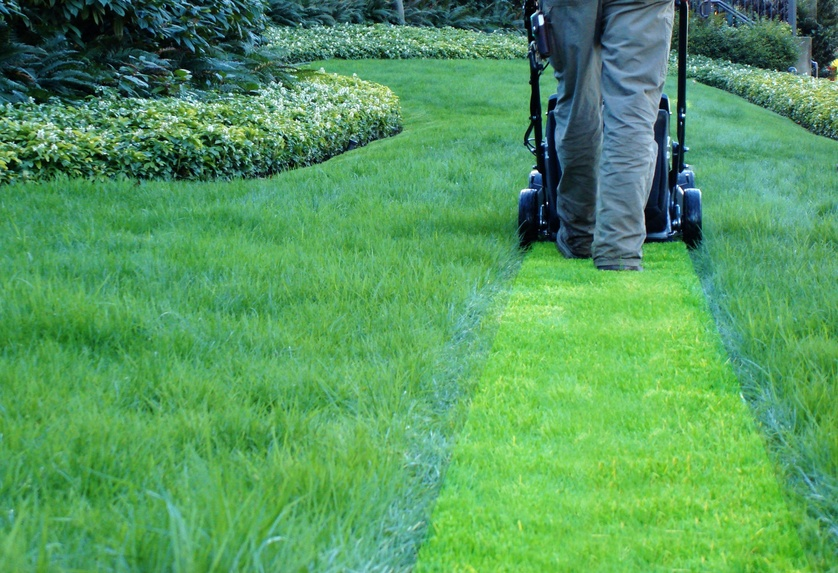 Natural lawn care products