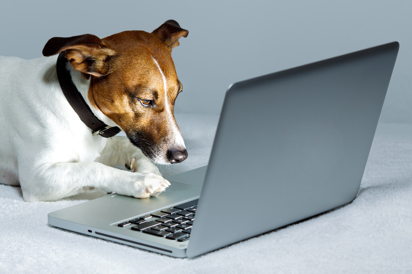 Veterinary internet marketing strategy