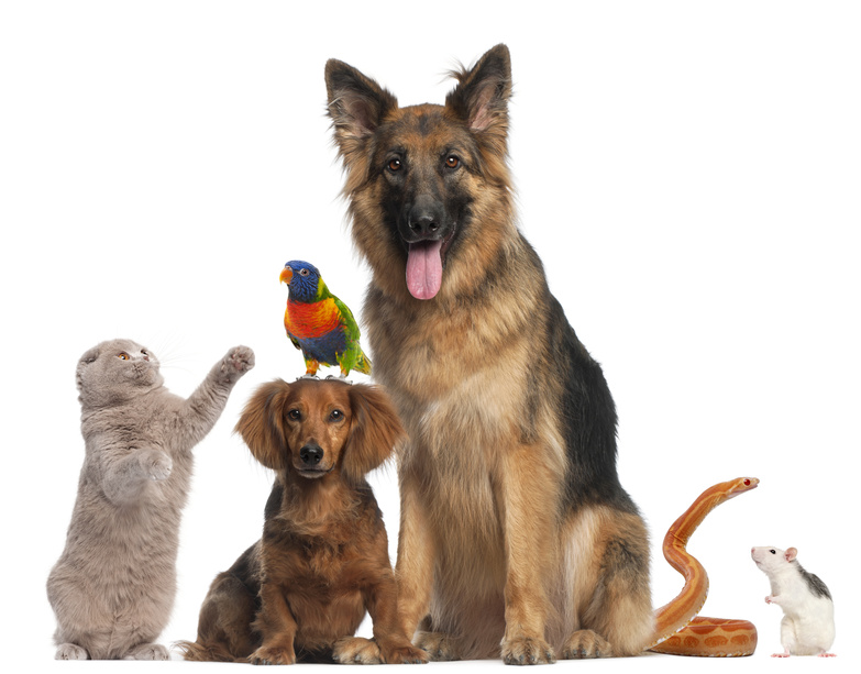 Dog training salem oregon