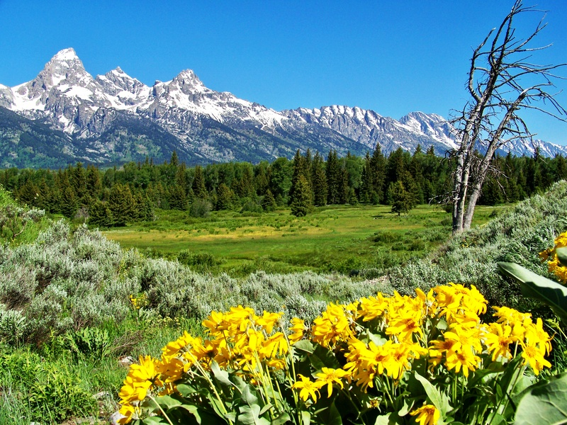 Jackson wyoming real estate