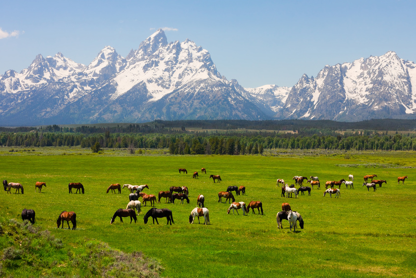 Jackson hole real estate