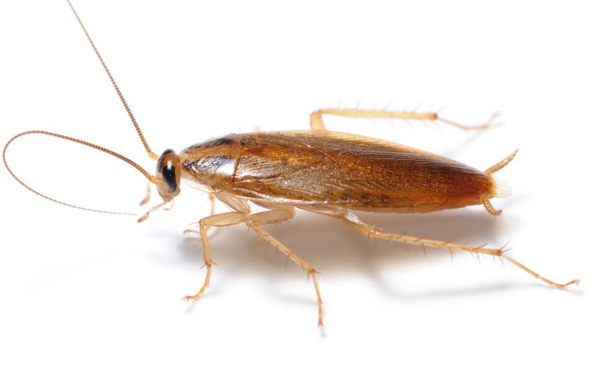 Pest control northern va