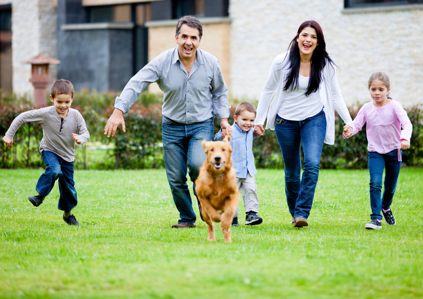 Dog training arlington