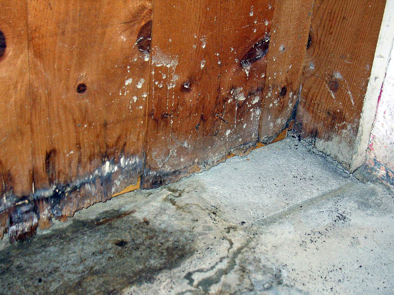 Mold remediation houston