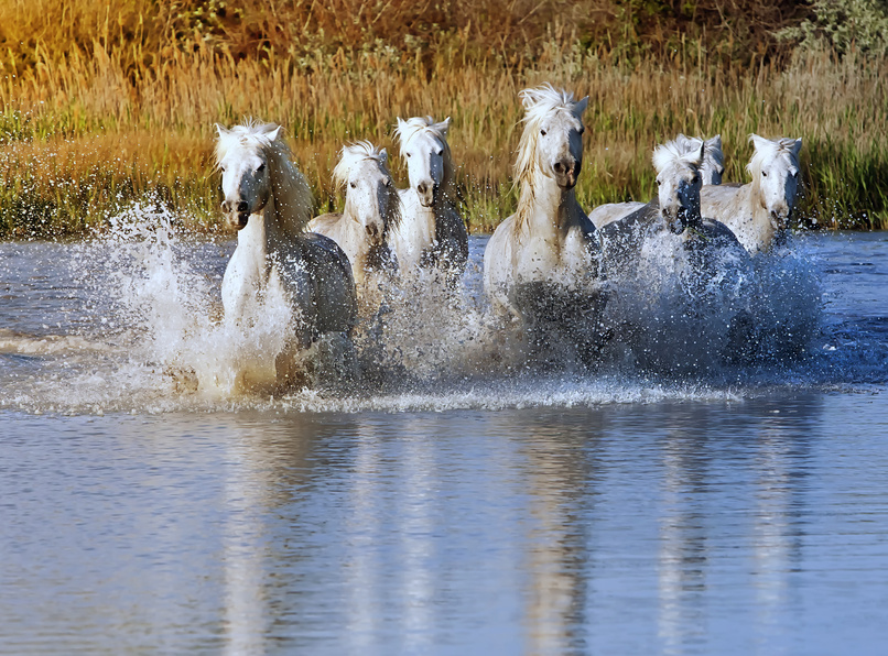Wild horses in north carolina