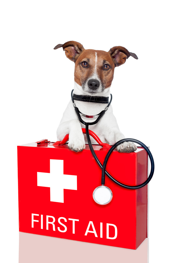 Veterinarian denver