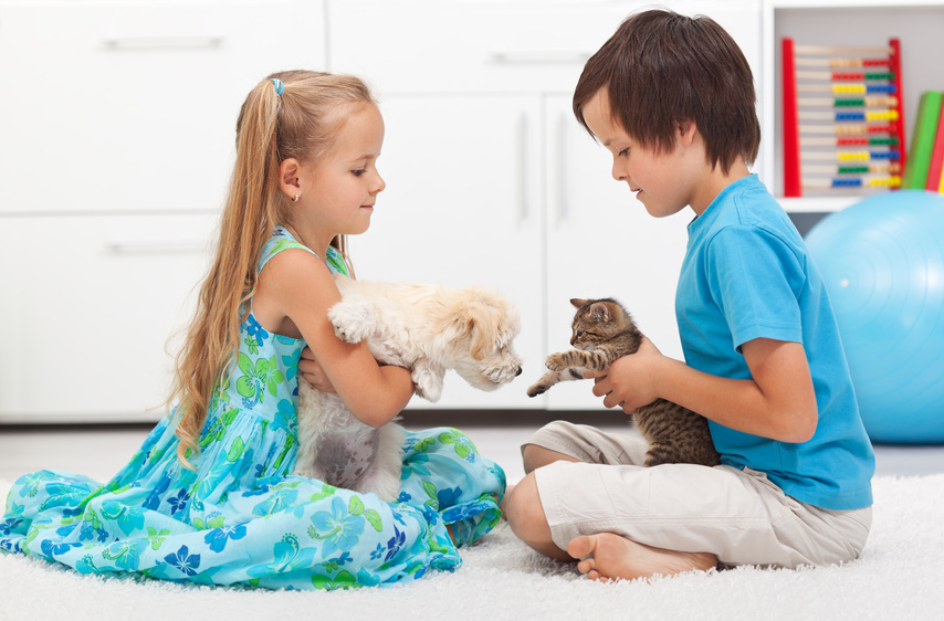 Why your pet needs premium veterinary care