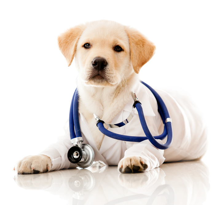 Denver veterinarians