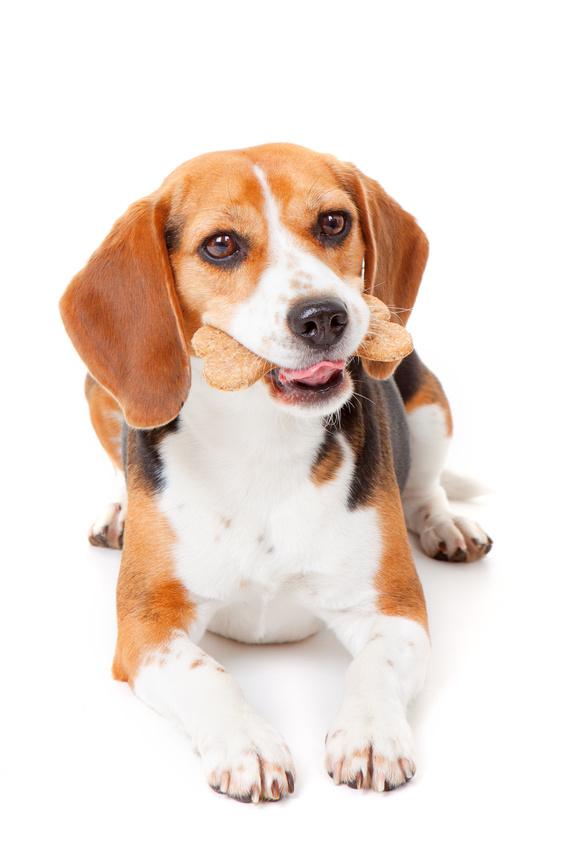 How to make dog treats