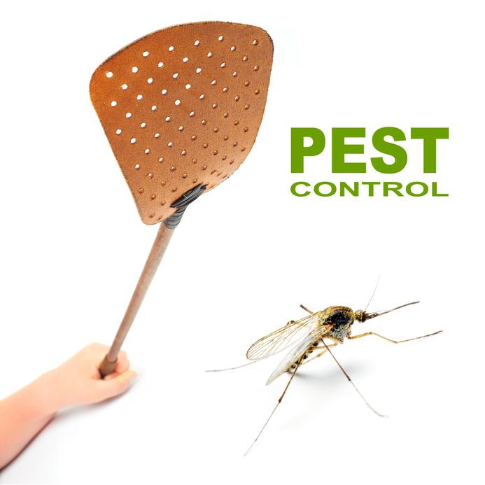 Quality pest control service