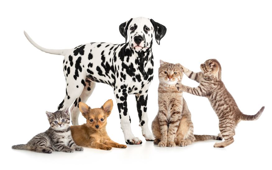 Veterinarians in greensboro nc