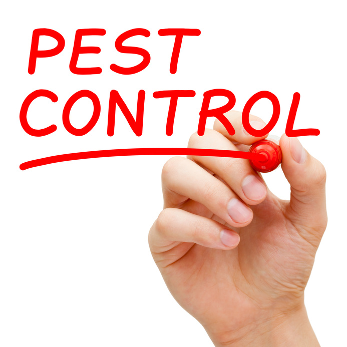 Pest control cost