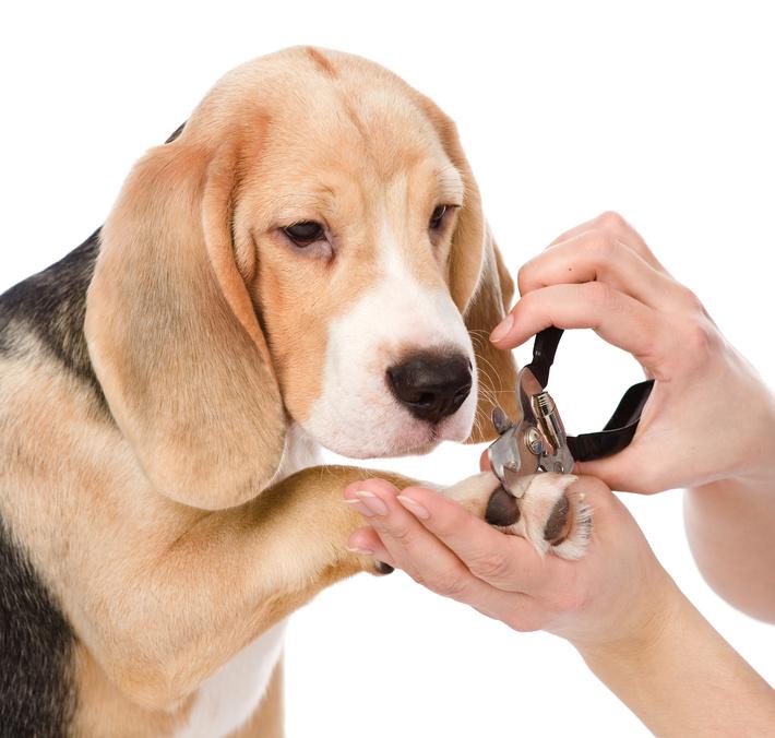Dog groomers santa rosa ca