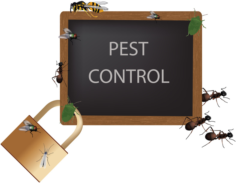 Termite control tallahassee