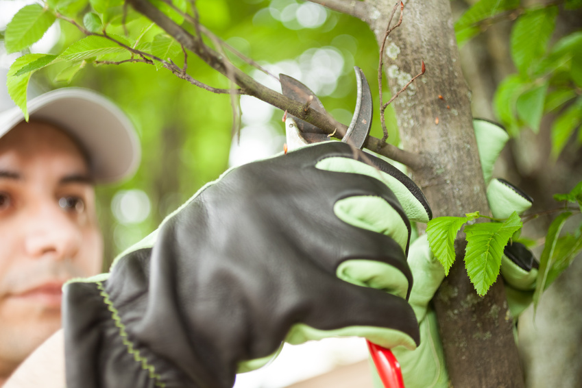 Tree service arlington va