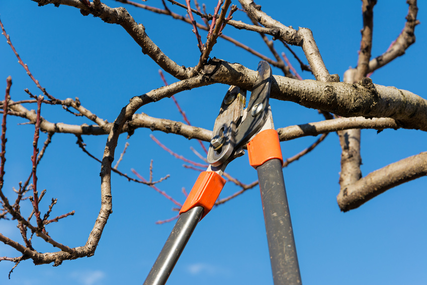 Tree services northern virginia