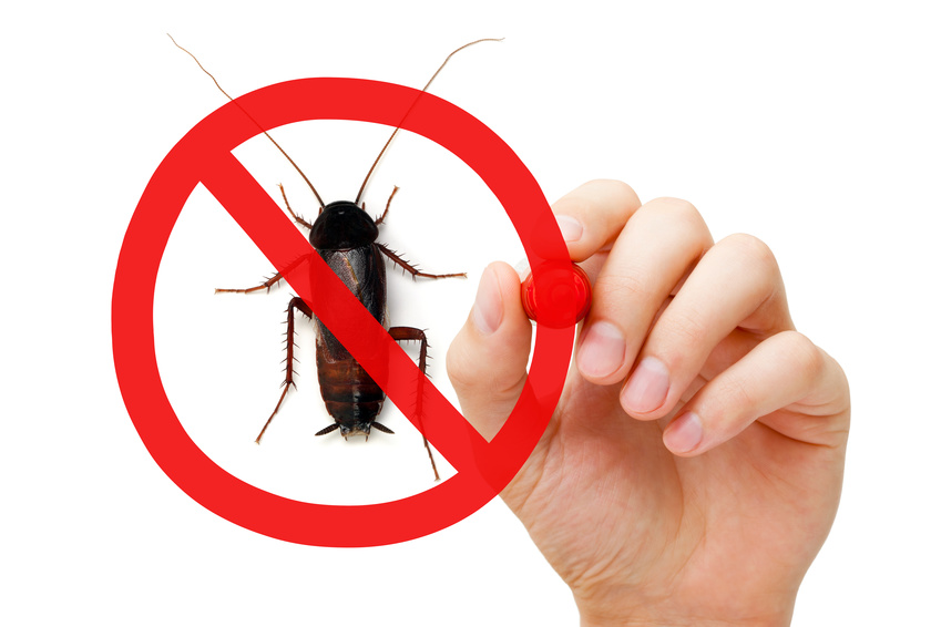 Pest removal tallahassee