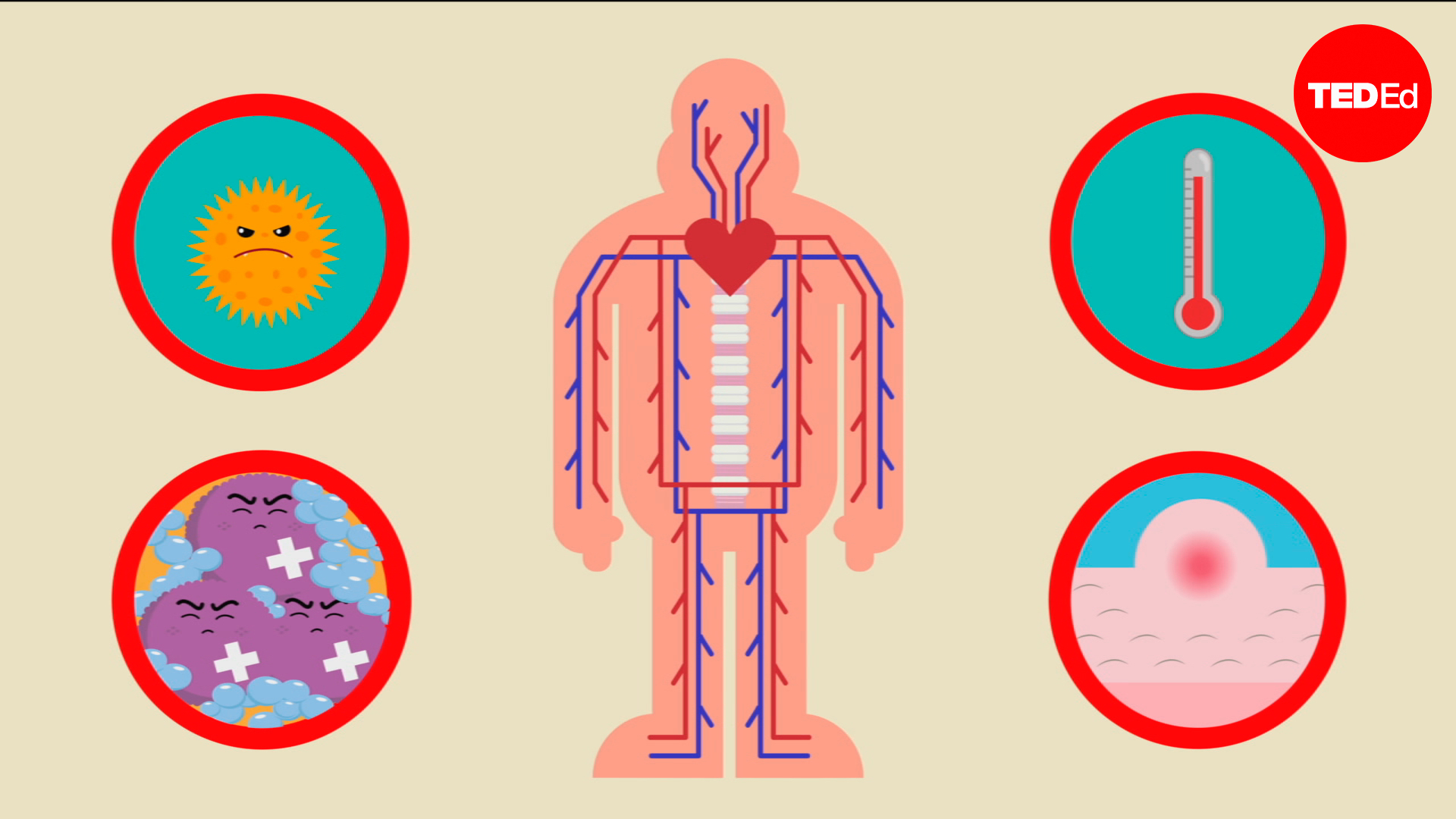 Emma Bryce: How does the immune system work? | TED Talk