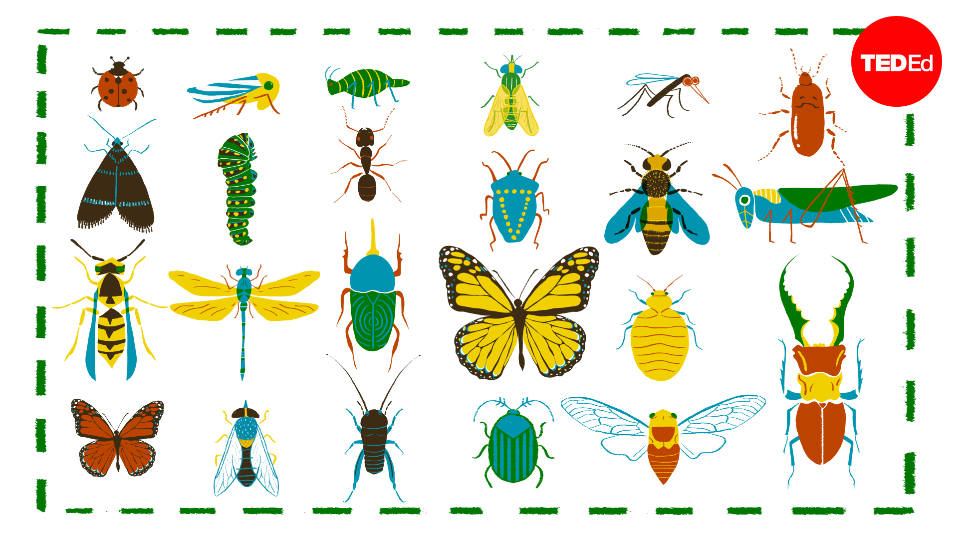 A simple way to tell insects apart