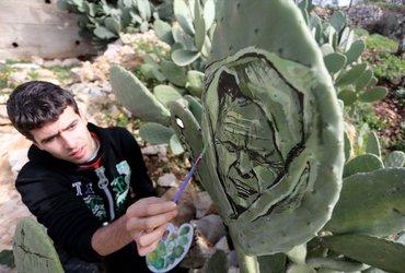 فنان فلسطيني يرسم لوحات فنية على جذوع نبات الصبار