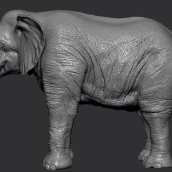 1 - Elephant