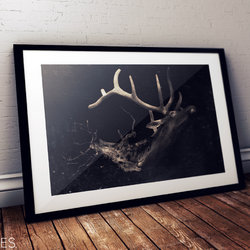 The Deer - Nature Series