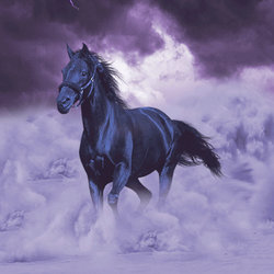 Black horse in the sky