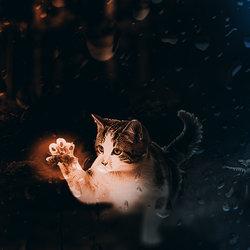 cat catch