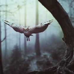 """the owl"""
