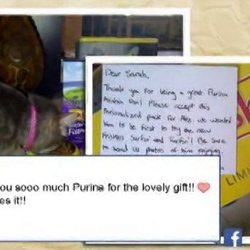 Nestle Purina Friskies Animated Video